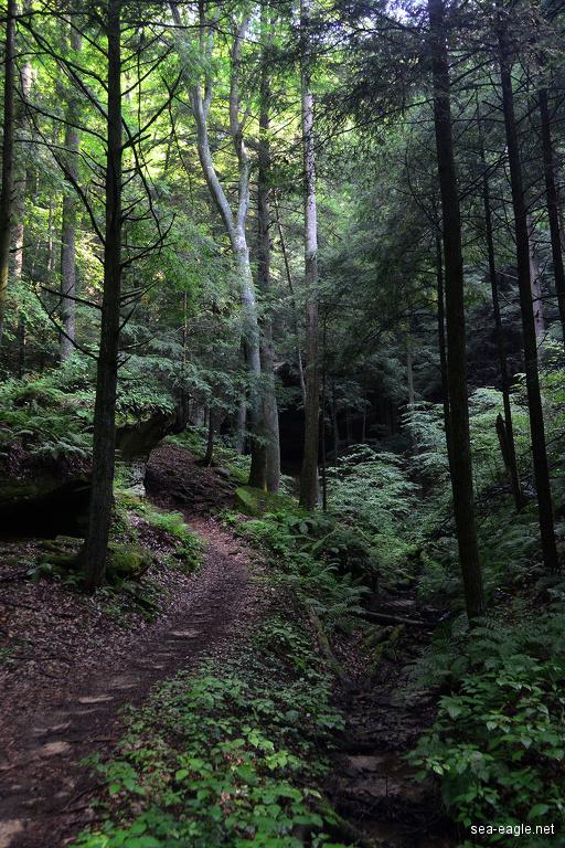 壁纸 风景 森林 桌面 512_768 竖版 竖屏 手机